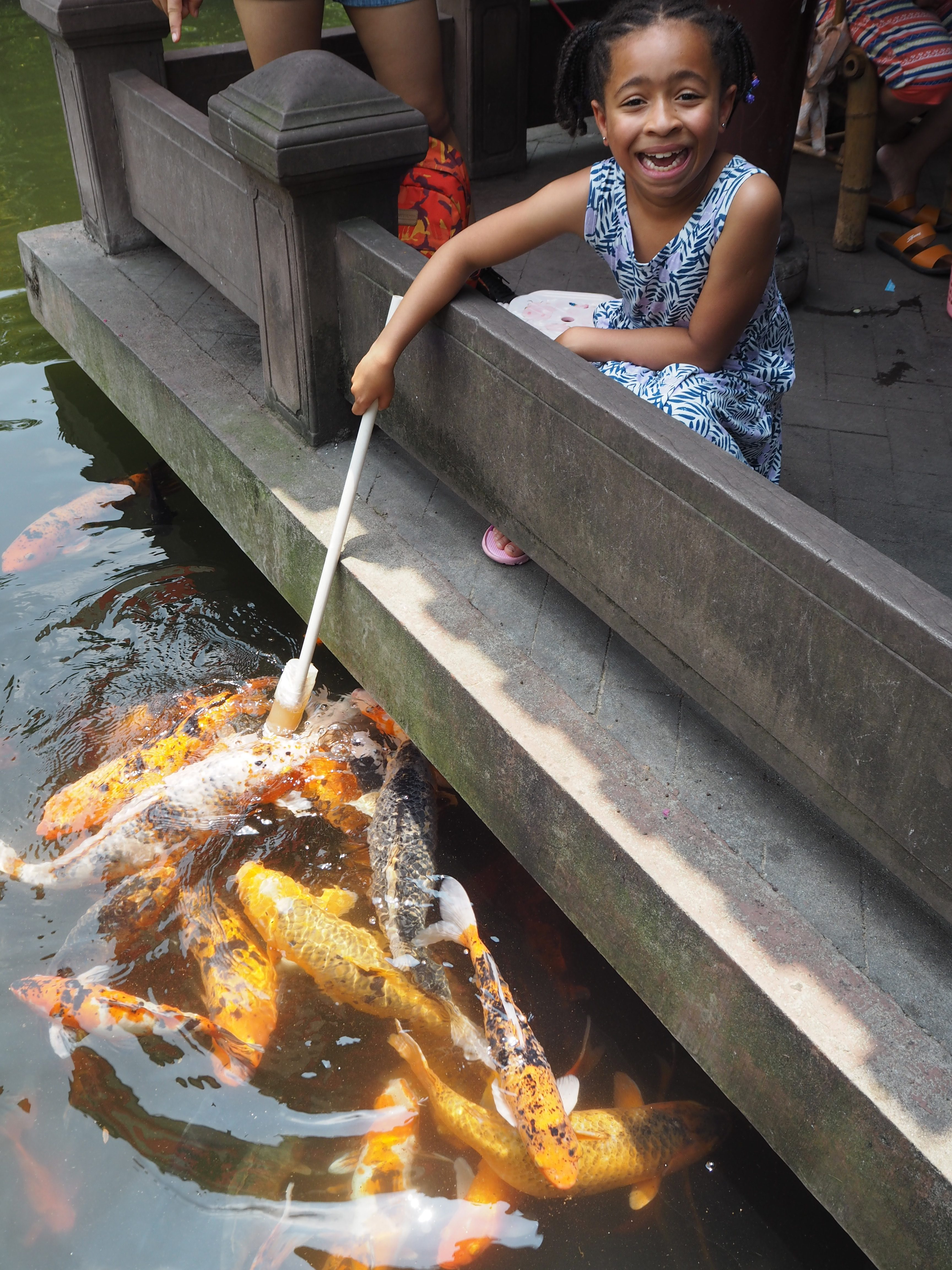 Bottle feeding koi carp in the People's Park